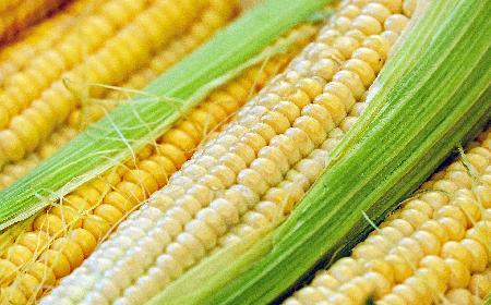 Gotowanie kukurydzy: jak długo gotować kukurydzę? [WIDEO]